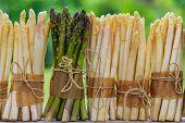 image of white asparagus  - Asparagus  - JPG