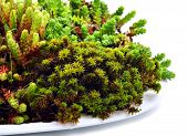 stock photo of lichenes  - Macro green moss and lichen isolated on white - JPG