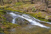 picture of virginia  - Secluded Mountain Cascade of the Rose River in Early Spring in Shenandoah National Park in Virginia - JPG