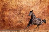 foto of galloping horse  - Young Budyonny horse galloping against brown background - JPG