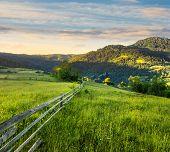 image of conifers  - composite rural landscape - JPG