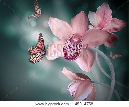 butterflies flora orchids  Butterfly Flower art love  background
