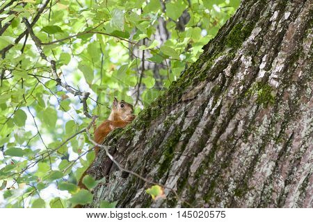 very beautiful squirrel against brightly green grass