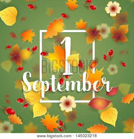 1 September Autumn Background. Bright autumn birch, oak, maple, chestnut leaves and berry with flowers light background. Square frame. Vector illustration. Back to school.