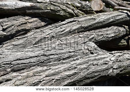 A pile of old wooden trunks. A pile of wooden logs.