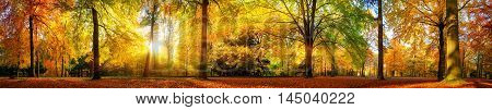 Extra wide panorama of a gorgeous forest in autumn a scenic landscape with pleasant warm sunshine