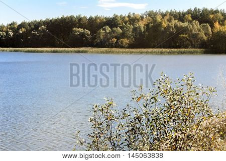 On the shore of a large lake with trees with yellow leaves. The crowns of trees reflected in the water.