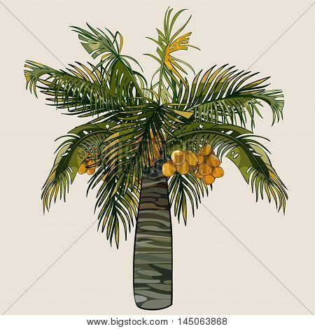 cartoon palm tree fluffy little with coconuts