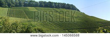 Winegrowing Baden Wurttemberg Grape Varieties Fields.
