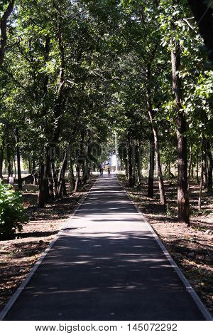 the road leading to the park road, park, nature, season, tree