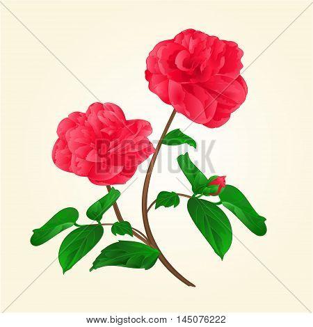 Camellia Japonica flowers with bud vintage vektor illustration