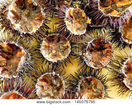 sea urchins to eat in the kitchen