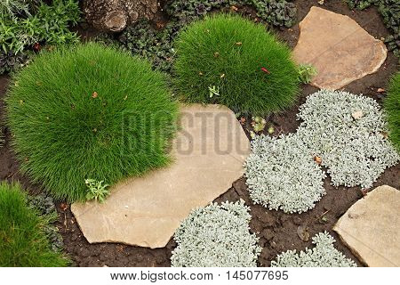 Ground cover plants - Armeria maritima and yarrow (Achilleio) against the background of a sandstone. Top view.