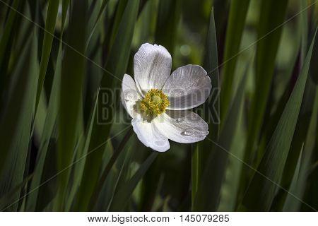 Summer Licht Flower Garden Blossom Floral Impression