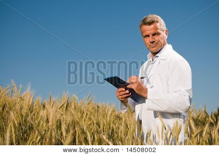 Satisfied mature technician checking the growth of the wheat for a quality control in a cereal field in summer