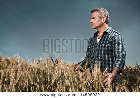 Mature farmer looking with satisfaction at his cultivated field and having care of wheat after a working day, dramatic sky