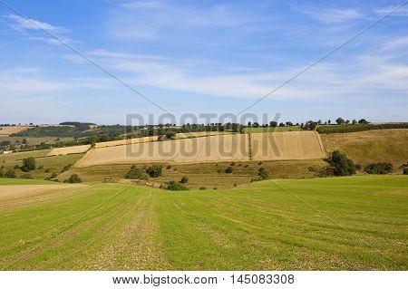 Hillside Agriculture