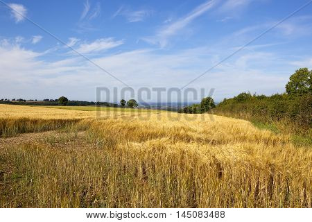 Barley Field With A View