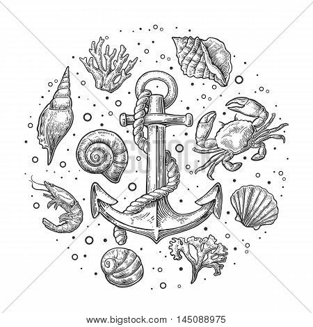 Set sea shell coral crab shrimp and anchor. Vector engraving vintage illustrations. Isolated on white background.