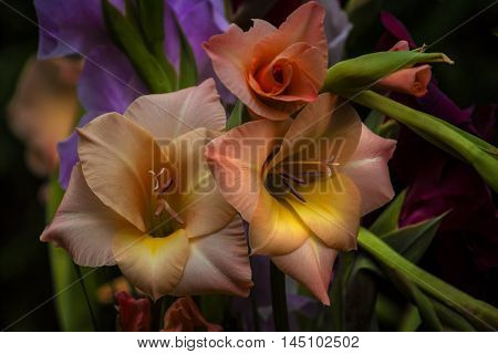Multicolor Gladiolus Flower Nostalgia Garden Impression Bouquet