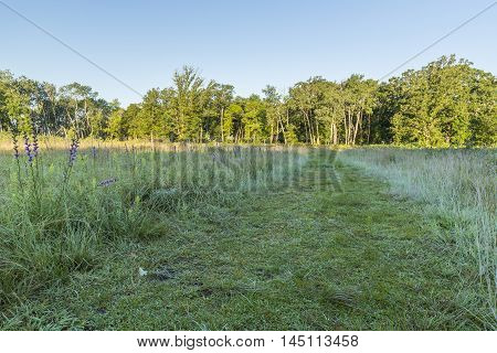 A trail in the meadow leading to the woods.