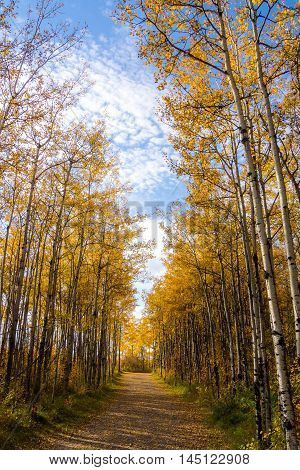 Yellow leaves on trees along a forest footpath during autumn