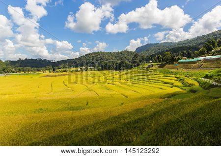 Green Terraced Rice Field in Mae Klang Luang Mae Chaem Chiang Mai Thailand