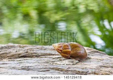 Close up Snail on the stone in the garden with green background