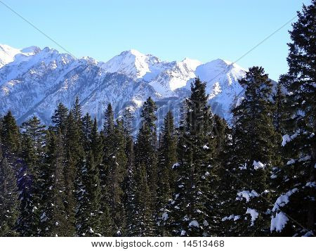 Pines And Peaks
