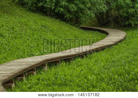 Winding Trail In The Woods