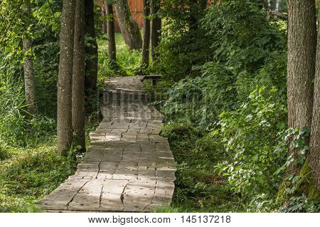 Trail To The Forest