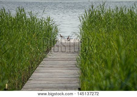 Wooden Walkway Leading To The Large Lake