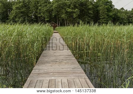 Wooden Walkway To Forest