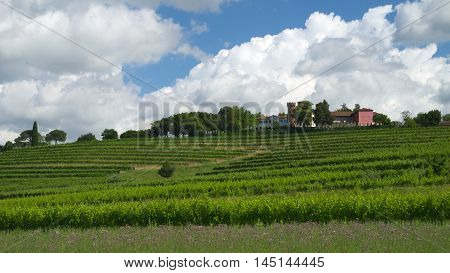 Wineyards near the castle of Buttrio, Friuli, Italy