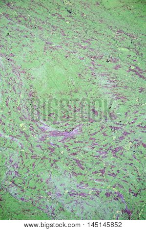 Green Slime.