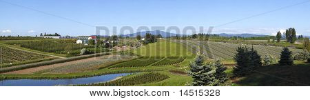 Agricultural Landscape Panorama, Oregon.