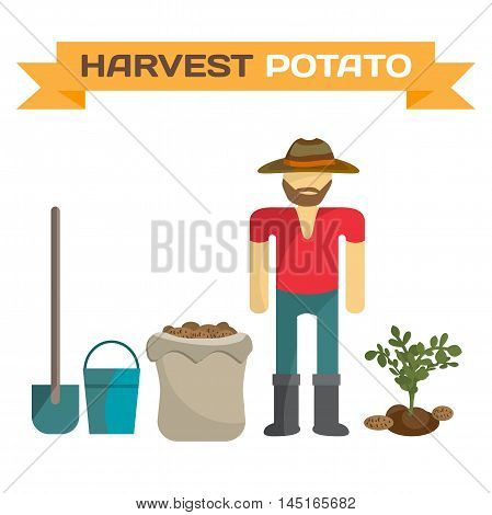 Man harvesting potato in the field cartoon flat vector illustration isolated on white background. Manual labor shovel bucket sack bush potatoes