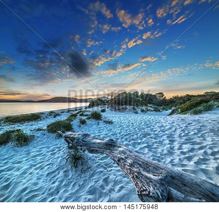 driftwood on the sand at sunset in Sardinia Italy