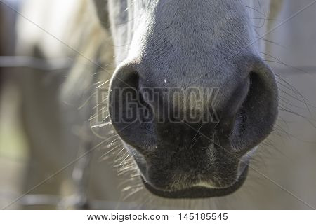 Close up of a horse's nose and mouth