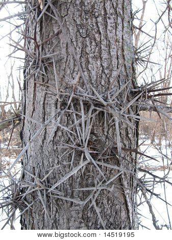 Cerca del árbol en el bosque de espinas creciendo