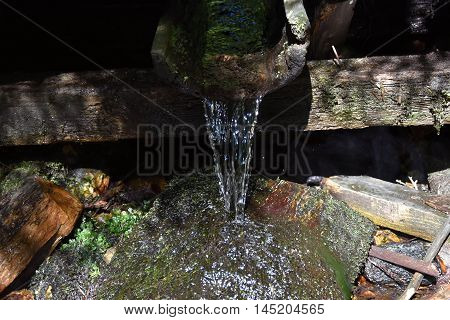 Water source in the forest. Water source.