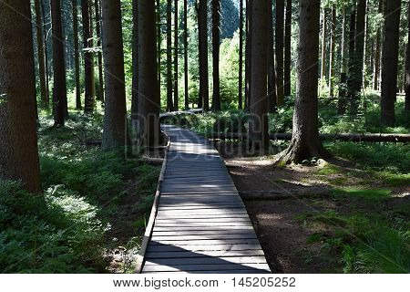 Way of wooden planks in the forest