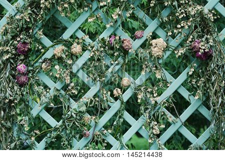Dried flowers on decorative lattice in the garden, vintage style.
