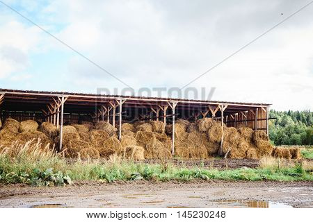 warehouse barn with bales of hay grass stored in a symmetrical pile stacked tot he roof