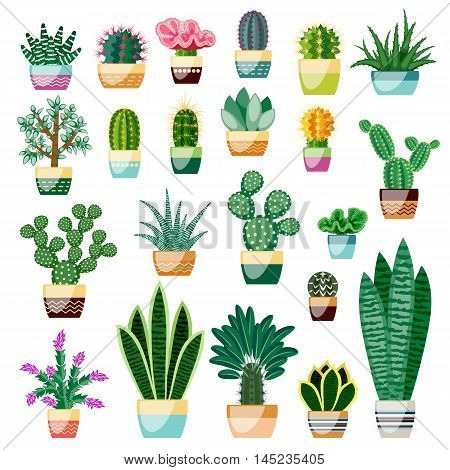 Big set of cactuses and succulents in pots. Cactuses and succulents isolated on white background. Indoor plants in a flat style. Vector illustration.