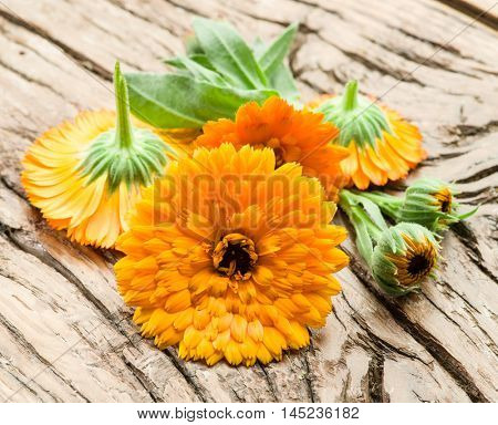 Calendula flowers on the old wooden table.