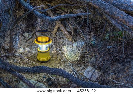 Luminous hand lantern surrounded by tree roots in the night