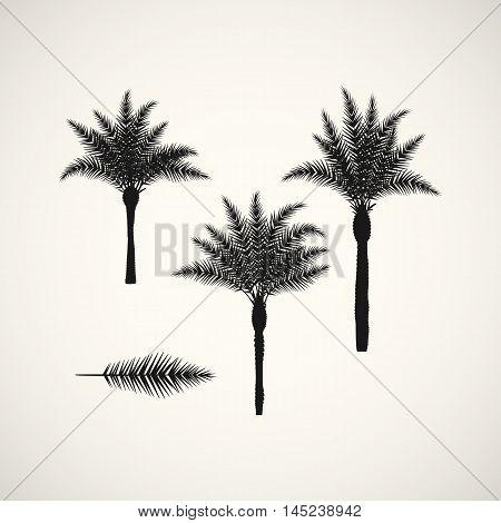 palm silhouttes on the white background. Vector illustration