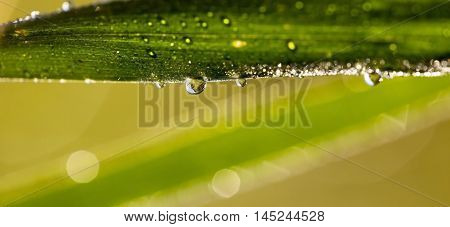 Nature website banner of fresh water drops on a grass