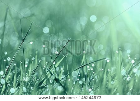 Grass and water drops in spring in blue